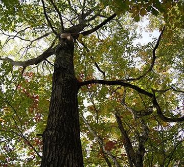 detail of tree