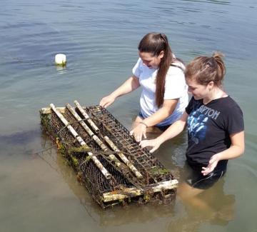 interns working on oyster farm